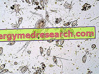 Plancton - Propiedades nutricionales