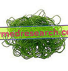 Eetbare algen - supplementen