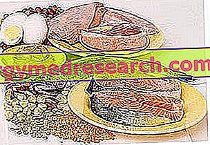 B12 vitamino biologinis prieinamumas dumbliams ir kitiems maisto produktams