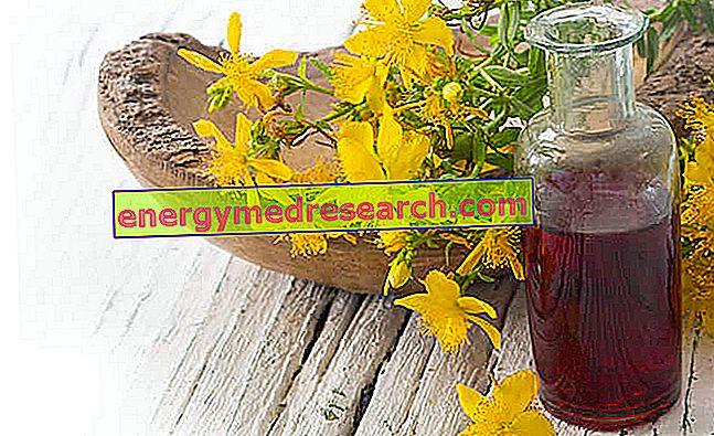Hypericum Oil - Ārstnieciskās īpašības