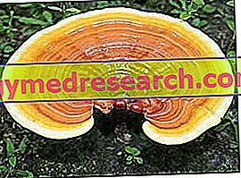 Ganoderma ή Reishi - θαυματουργό μανιτάρι;