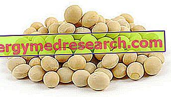 Sojų baltymai
