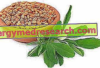 Fenugreek