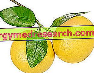 Grapefruitové semená, extrakt z grapefruitových jadier