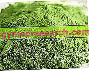 Klamath aļģes