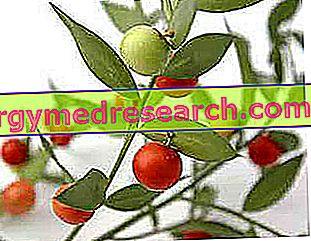 Hemoroitlere karşı bitkisel çaylar