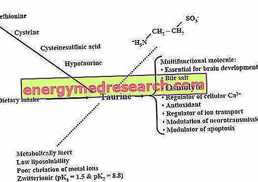 širdies sveikatos aminorūgštys