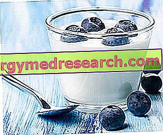 Jogurtas, pieno fermentai ir prebiotikai