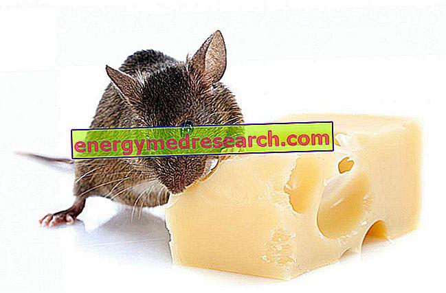 Чи люблять миші сир?
