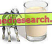 Kazas piens: uztura un organoleptiskie aspekti