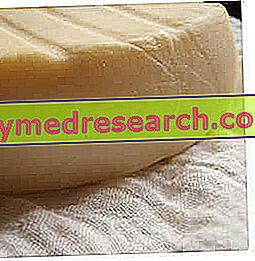 Sūris - daržovių šliužo fermentas ir gyvūnų šliužo fermentas