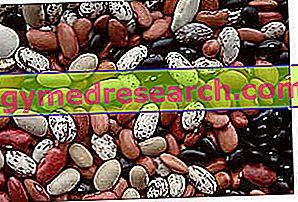 Leguminosas proteinas