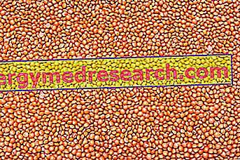 Sarkanās lēcas ar R.Borgacci