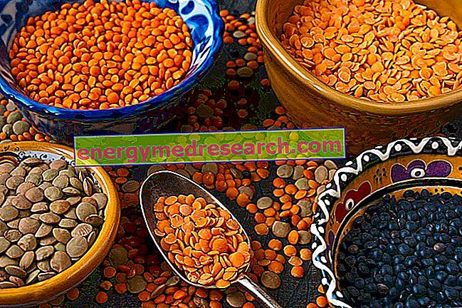 렌즈 콩의 종류와 세계에서의 사용