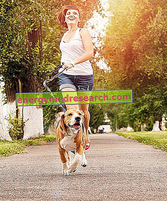 Kardiovaskulære sykdommer og regelmessig mosjon