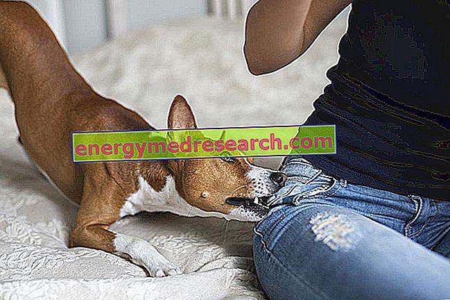 Dzīvnieku kodumi: kādi riski?