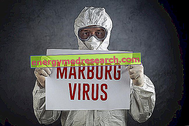Marburg 바이러스는 어떻게 전염됩니까?
