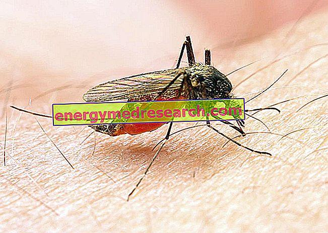 Kāda saikne pastāv starp malāriju un talasēmiju?