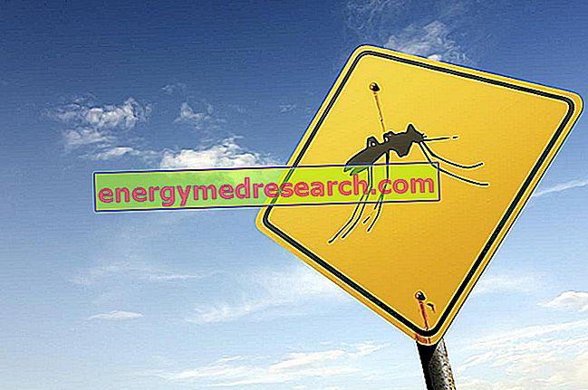 Mengapa chikungunya menimbulkan kekhawatiran?