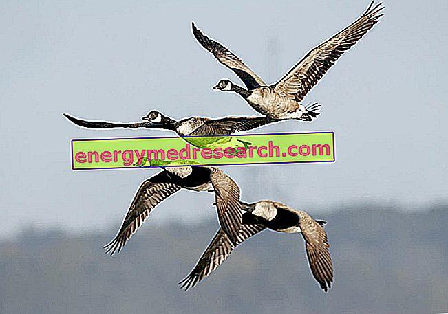 Γρίπη των πτηνών: πώς μεταδίδεται από τα πουλερικά στον άνθρωπο;