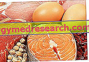 Proteína para perda de peso - clareza em proteínas