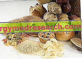 Άμυλο - αμυλούχα τρόφιμα