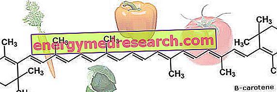 Los carotenoides