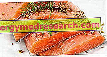 Riblji protein