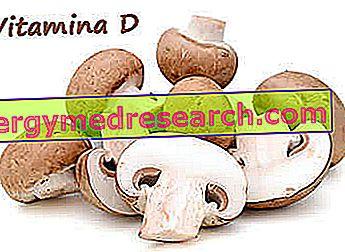 La vitamina D en los champiñones