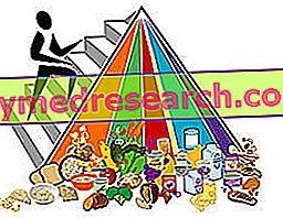 Besinler: Organizmanın yaşamı için gerekli maddeler
