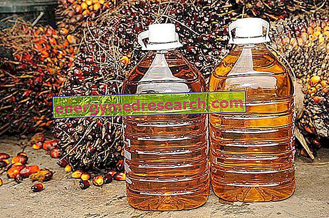 Palmový olej: obchod a evropské potravinové právo