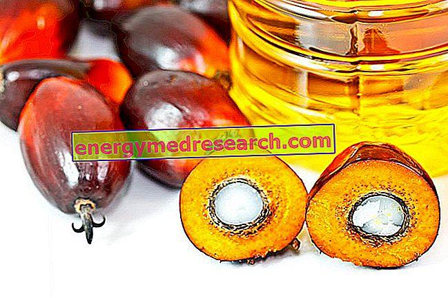 Palmovo olje: Povzetek