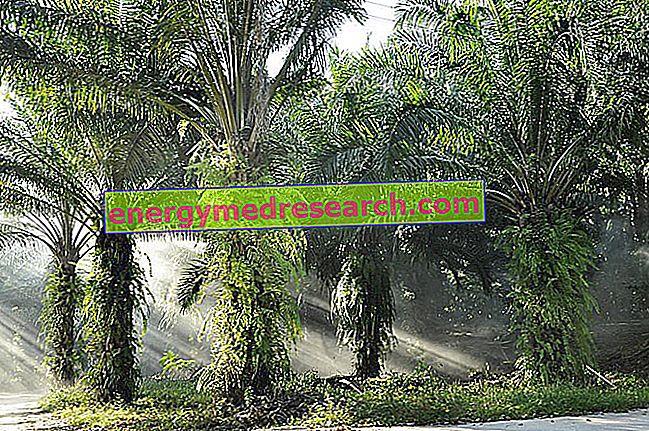 Пальмовое масло: история