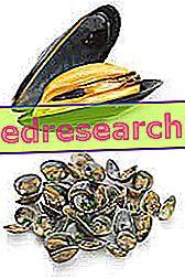 Moliuskai - mitybos savybės