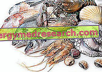 Riba i riblji proizvodi