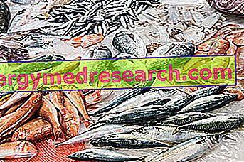 Chudé ryby R.Borgacciho