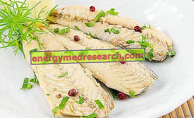 Caballa Omega 3 - Nutrientes Preciosos