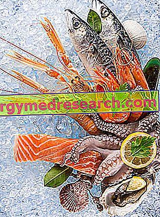 Ryby a zdravie: ktoré ryby uprednostňujete?