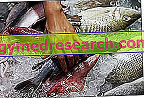 Friss szezonális hal