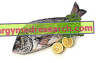 Tanuta: Näringsmässiga egenskaper, roll i kost och hur man lagar mat från R.Borgacci
