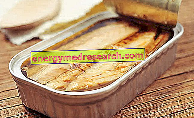 Консервирана скумрия - Роля в диетата