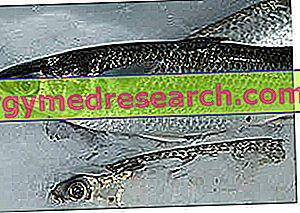 hipertenzijai naudingos žuvys hipertenzijos laipsnių tipai