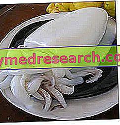 mürekkepbalığı