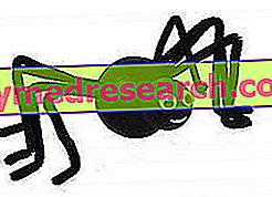 Arachnophobia - terapii psihologice