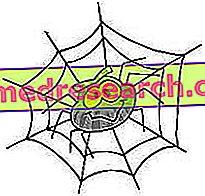 Арацхнопхобиа: страх од паукова