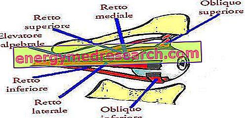 Latihan visual: latihan mata untuk mereka yang kecil, berkuasa mata otot