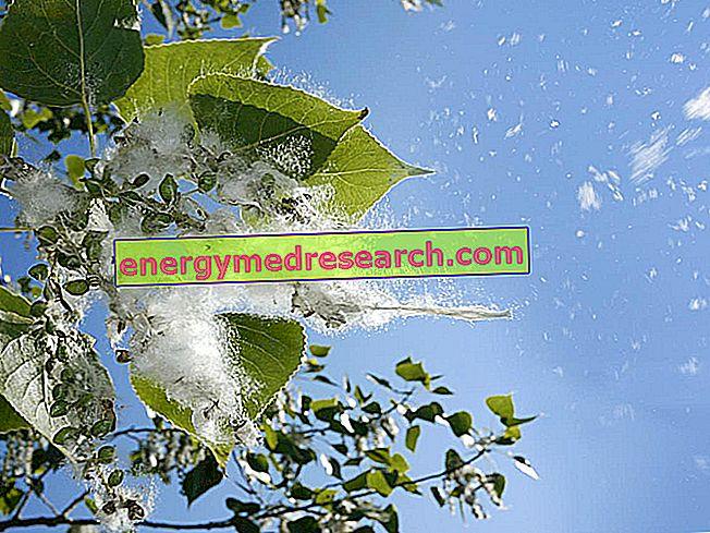 Konjunktivitt: Flere råd i tilfelle pollenallergi