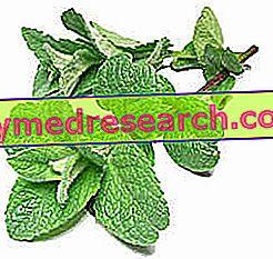 Лијекови за халитозу