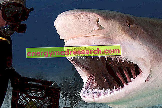 Dantys: ką reiškia difiodonte ir heterodontas?