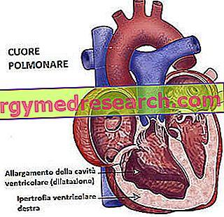 Akciğer Kalbi